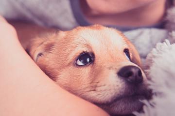 ¿Qué hacer si mi cachorro llora por las noches?