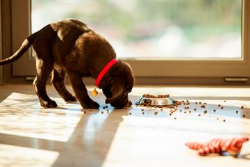 ¿Qué hace Hill's Puppy Small & Toy por tu pequeñín?