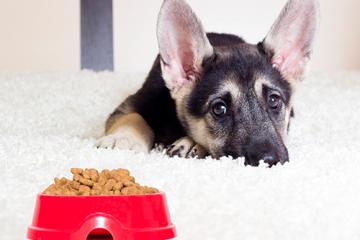 ¿Qué hago si mi cachorro no quiere comer?