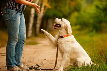 ¿Qué hacer para tener un perrito sociable desde cachorro?