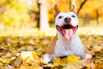 ¿Qué cosas hacen feliz a mi perro?