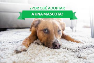 ¿Por qué adoptar una mascota?