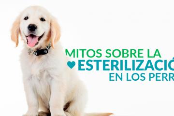 Mitos sobre la esterilización en los perros