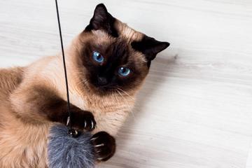 ¿Por qué son importantes los juegos para mi gato?