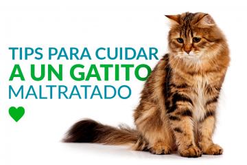 Tips para cuidar a un gatito maltratado