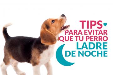 Tips para evitar que tu perro ladre de noche