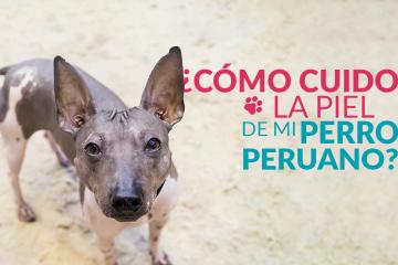 ¿Cómo cuido la piel de mi perro peruano?