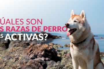 ¿Cuáles son las razas de perro más activas?