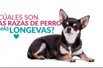 ¿Cuáles son las razas de perro más longevas?