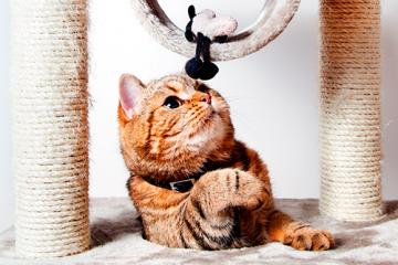 ¿Qué beneficios tiene un rascador para gatos?