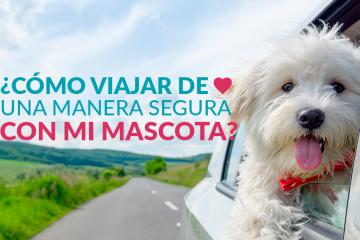 ¿Cómo viajar de una manera segura con mi mascota?