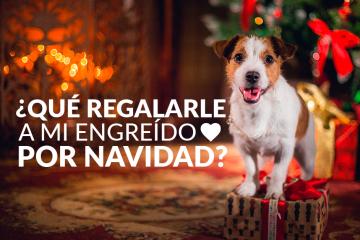 ¿Qué regalarle a mi engreído por Navidad?