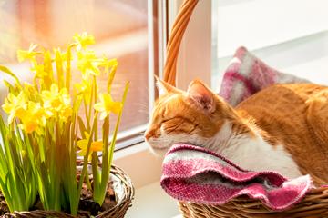 ¿Cómo cuidar a mi gatito en verano?