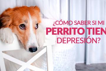 ¿Cómo saber si mi perrito tiene depresión?
