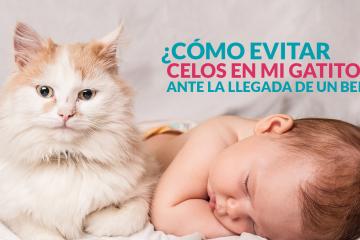 ¿Cómo evitar celos en mi gatito ante la llegada de un bebé?