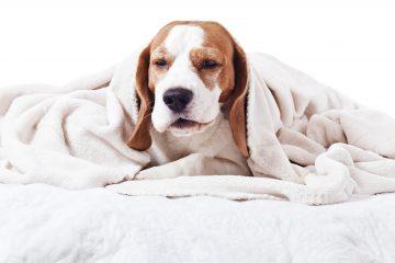 6 Causas que originan tos en los perritos
