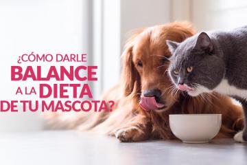 ¿Cómo darle balance a la dieta de tu mascota?