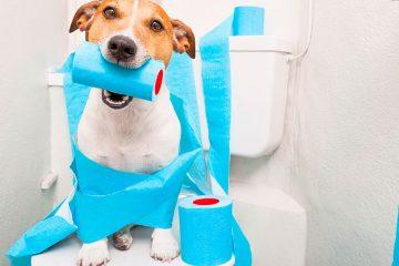 Insuficiencia renal canina