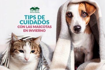 El invierno y los problemas respiratorios y articulaciones en perros y gatos