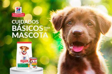 Cuidados básicos para tu cachorro