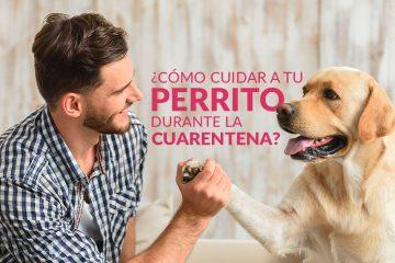 Cuida a tu perrito durante la cuarentena