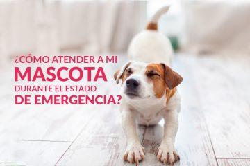 ¿Cómo atender a mi mascota durante el estado de emergencia?
