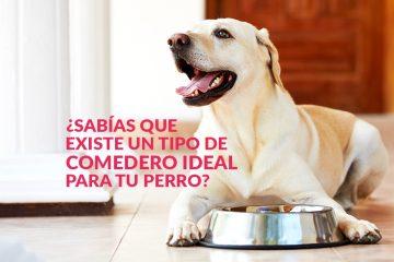 ¿Sabías que existe un tipo de comedero ideal para tu perro?