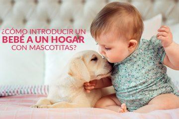 ¿Cómo introducir un bebé a un hogar con mascotitas?