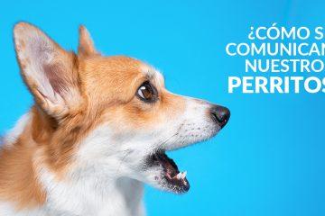 ¿Cómo se comunican nuestros perritos?