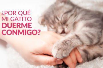 ¿Por qué mi gatito duerme conmigo?