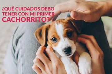 ¿Qué cuidados debo tener con mi primer cachorrito?