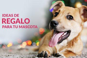 Ideas de regalos para tu mascota