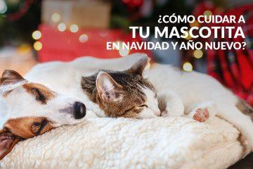 ¿Cómo cuidar a tu mascotita en Navidad y Año Nuevo?