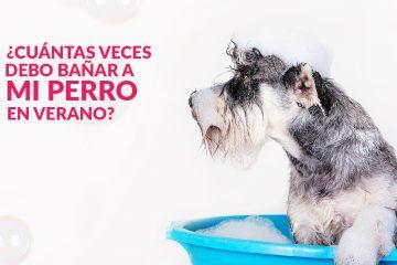 ¿Cuántas veces debo bañar a mi perro en verano?