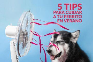 5 TIPS para cuidar a tu perrito en verano