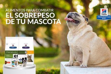 Alimentos para combatir el sobrepeso de tu mascota