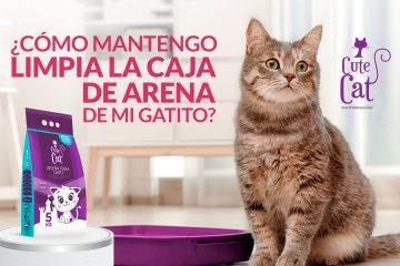 ¿Cómo mantengo limpia la caja de arena de mi gatito?