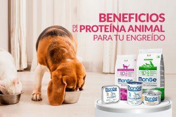 Beneficios de la proteína animal para tu engreído