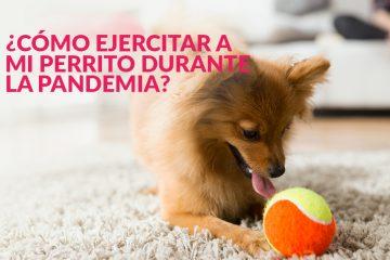 ¿Cómo ejercitar a mi perrito durante la pandemia?