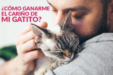 ¿Cómo ganarme el cariño de mi gatito?
