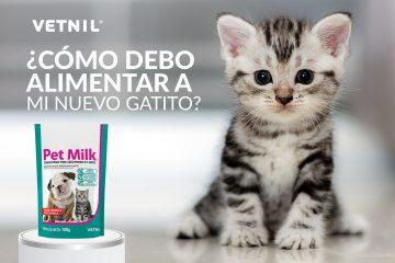 ¿Cómo debo alimentar a mi nuevo gatito?
