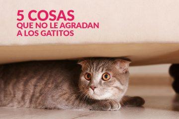 5 cosas que no le agradan a los gatitos