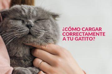 ¿Cómo cargar correctamente a tu gatito?