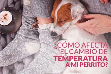 ¿Cómo afecta el cambio de temperatura a mi perrito?