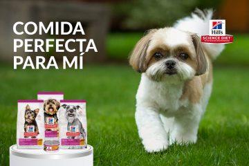 ¿Cómo afecta la artritis en perros?